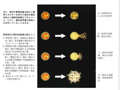 電離性酸化水による菌体破壊像